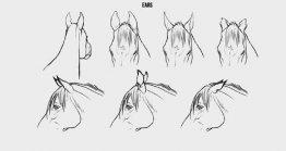 二维动漫动画只创作马的动作基本手法借鉴