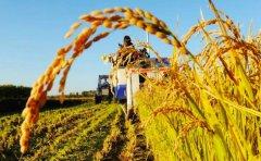 农业生产科学种植技术MG动画创作文案剧本内容